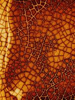 Cracked Glass Piece